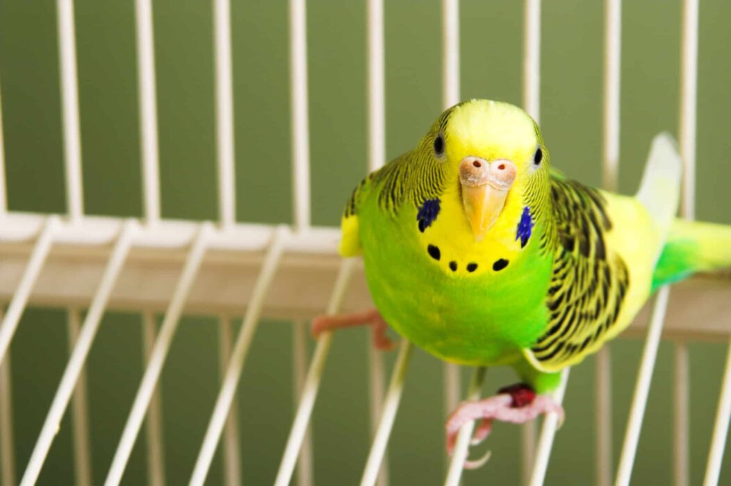 parrot prices