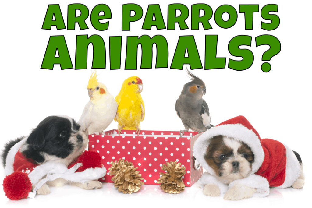 Parrots and puppies